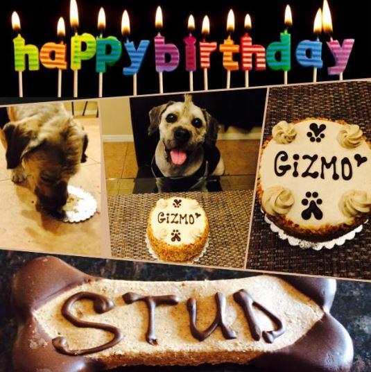 Pleasant Pueblo Place Three Dog Bakery Funny Birthday Cards Online Inifodamsfinfo