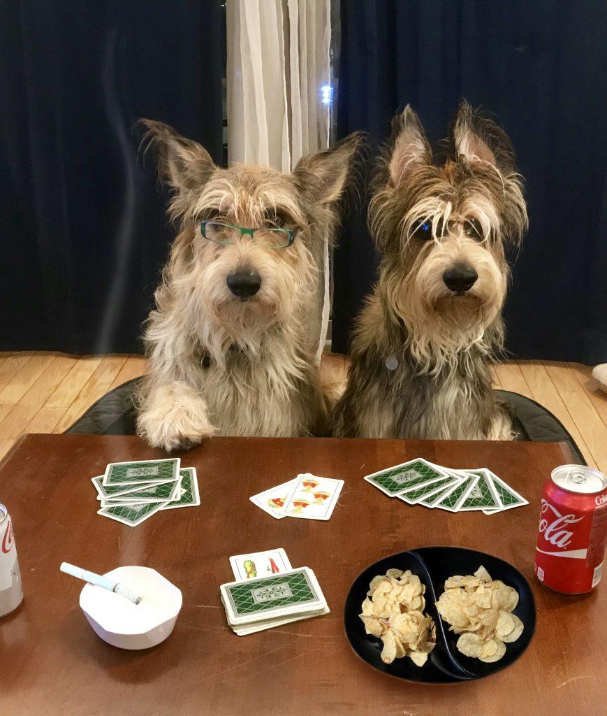 Chester Amp Rodney Wanna Bet Three Dog Bakery