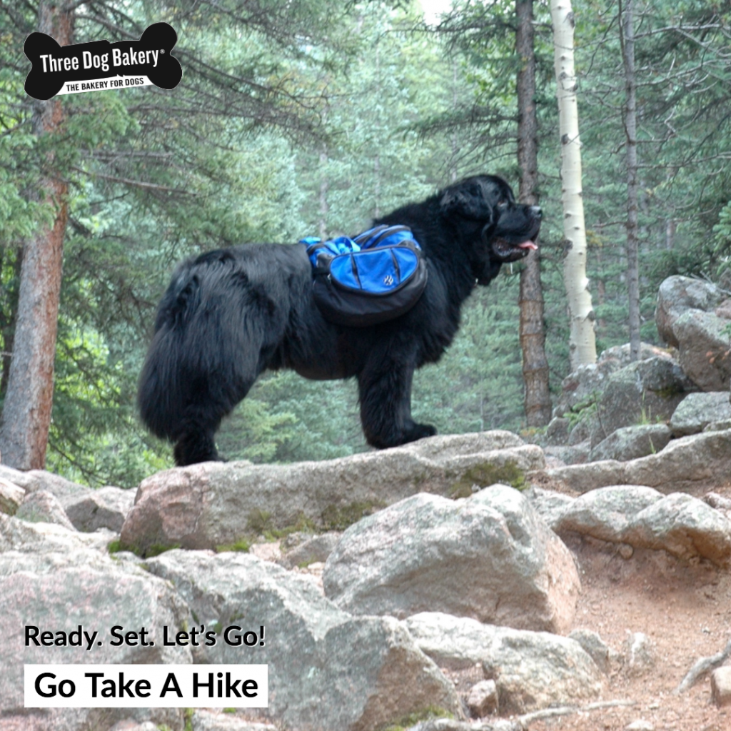 Stories Tales Go Dog Go: Ready. Set. Go! Go Take A Hike
